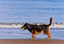 Cani spiaggia Sud
