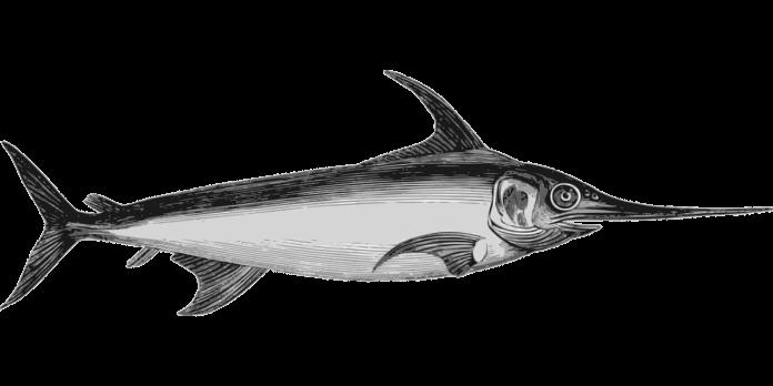 Pesce Spada Messina