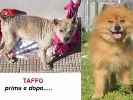 taffo