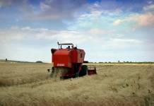 Agricoltura Puglia
