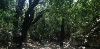 Sicilia foreste