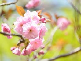 Marzo primavera