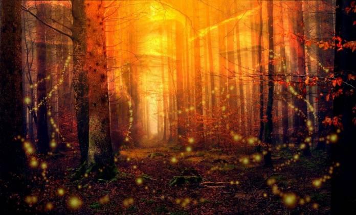 bosco delle lucciole